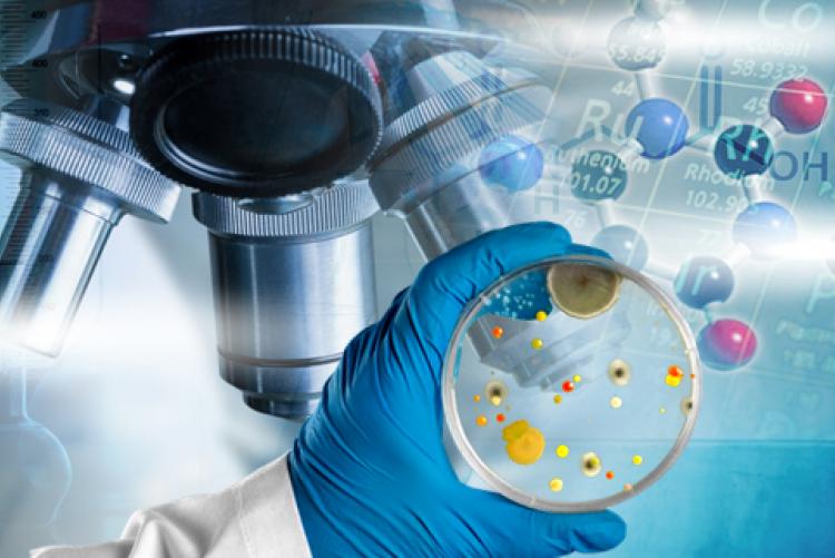 Katedra Biotechnologii i Mikrobiologii Żywności